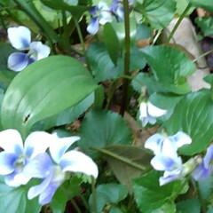 春 春の庭(2枚目)