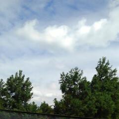 秋の花/秋の空 ボランティア先の行きと帰りの空 青い空に…