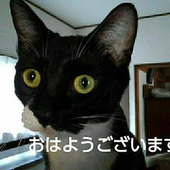 猫のいる暮らし/にゃんこ日めくり おはようございます 5月15日 金曜日 …