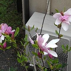 春 春の庭(6枚目)