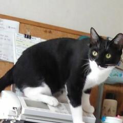 白黒猫/いいね/電話/フォロー大歓迎/LIMIAペット同好会/にゃんこ同好会/... 「唯今電話に出ることが出来ません❗」 ま…