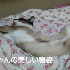 にゃんこ同好会/猫の気持ち るっちゃん寝ていても美容体操してるみたい