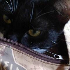 猫/白黒猫/フォロー大歓迎/LIMIAペット同好会/にゃんこ同好会/うちの子ベストショット 僕 このお鞄にはいって ちょっとお昼寝 …