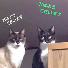 猫のいる生活/ご挨拶/にゃんこ同好会/にゃんこ日めくり おはようございます🙀🙀 爽やかなすこぶる…