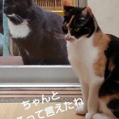 猫の気持ち/猫のいる柄が/にゃんこ日めくり おはようございます 5月11日 月曜日で…(2枚目)