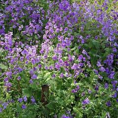 風景/花のある生活 お散歩してたらもう初夏並みの 景色になっ…(7枚目)