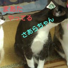 猫のいる生活/にゃんこ同好会/ねこ 今日は3️⃣ニャンズの ニャルソックが見…(10枚目)
