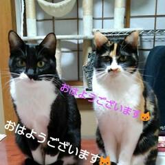 ご挨拶/姉弟猫/にゃんこ日めくり/フォロー大歓迎 おはようございます🐱😻 1月13日の朝で…
