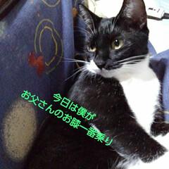 白黒猫 お父さんが座るとすかさず すぐに膝に座る…