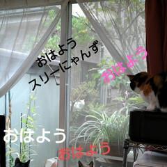 猫のいる生活/にゃんこ同好会 相変わらずの朝の風景 本当に欠かさずよく…(1枚目)
