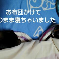 姉弟/にゃんこ同好会 お布団の横に 猫ベッドに入って寝たままの…