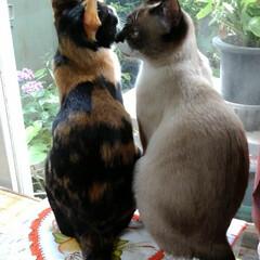 お外見張り隊/三姉弟猫/雨季ウキフォト投稿キャンペーン/フォロー大歓迎/LIMIAペット同好会/にゃんこ同好会 白いにゃんこさんがお外にいたので3にゃん…(5枚目)