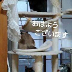 猫のいる暮らし/にゃんこ同好会/にゃんこ日めくり おはようございます 4月12日 日曜日の…