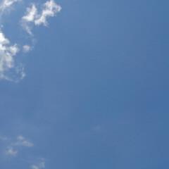 風景 畑の夏の空  夏の空の下に 大好きな百合…(2枚目)