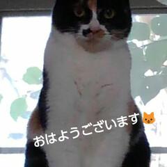 三毛猫/リミアペット同好会 紗羅のお見送り  「気を付けて  行って…