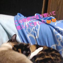 三姉弟猫/ねこ/にゃんこ同好会/猫のいる生活 昨日の夕方のひとこま 瑠月と沙羅が寝てる…(4枚目)