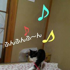 猫の気持ち/にゃんこ同好会/にゃんこ日めくり/ダイソー/梅雨/梅雨対策/... おはようございます 7月5日 日曜日です…(7枚目)