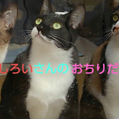 猫のいる生活/にゃんこ同好会/ねこ 今日は3️⃣ニャンズの ニャルソックが見…(6枚目)