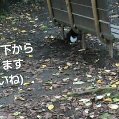 わんこ同好会/にゃんこ同好会 夕方の散歩の時 素敵なボディガードが一緒…(3枚目)