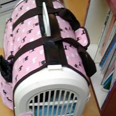 病院/白黒猫 紗夢が頻繁にトイレに通うので 病院に行っ…