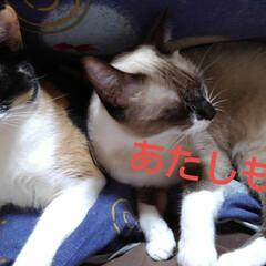 昼寝/仲良し/猫/姉妹/フォロー大歓迎 今日は雨降りの土曜日  寒いので何日か前…(4枚目)