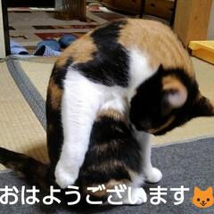 三毛猫/フォロー大歓迎 おはようございます🐱  霧雨の降ってる寒…