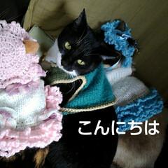 猫のいる生活/三姉弟猫/にゃんこ日めくり/にゃんこ同好会 こんにちは(おはようございます) 4月1…