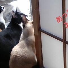 猫のいる生活/にゃんこ同好会/ねこ 今日は3️⃣ニャンズの ニャルソックが見…(1枚目)