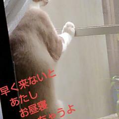 リミアペット同好会/猫/シャム/フォロー大歓迎 すれ違いに待っていた 可愛いカップルの待…(4枚目)