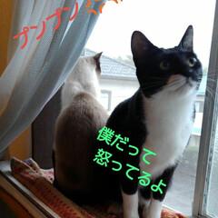 猫/白黒猫/姉弟/フォロー大歓迎 なんか喧嘩中みたいです