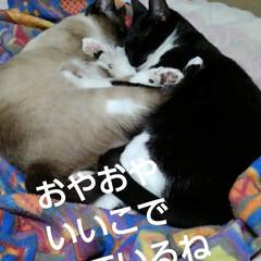 猫のいる生活/にゃんこ同好会 昨日の夜 母待ちの紗夢、瑠月  先に二人…