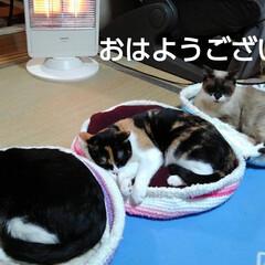 にゃんこ日めくり/にゃんこ同好会/三姉弟猫 おはようございます🐱 今にも雪が降って来…