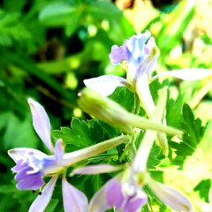 風景/よもぎの花/フォロー大歓迎/春 これ ヨモギの花です 初めて見たのでびっ…