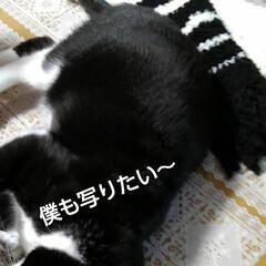 ハンドメイド/セリア セリアの毛糸Miu、白5個、黒2個で マ…(4枚目)