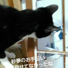 白黒猫 まだ見せてなかったね 紗夢のお手伝い 気…
