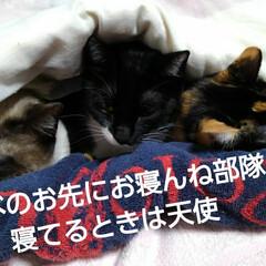 フォロー大歓迎/三姉弟 見飽きた3にゃんずの お先にお寝んねスタ…