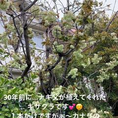 平成最後の一枚 狭い庭ですが…桜、金木犀、椿、山茶花  …