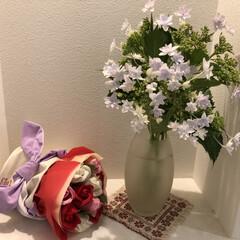 玄関インテリア/玄関/お花/紫陽花/ソープフラワー/玄関あるある/... 誕生日にいただいたソープフラワーはいつも…