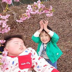 美和桜/桜/LIMIAおでかけ部/風景 近所の桜まつりにいってきました🌸  やっ…(1枚目)