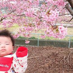 美和桜/桜/LIMIAおでかけ部/風景 近所の桜まつりにいってきました🌸  やっ…(2枚目)