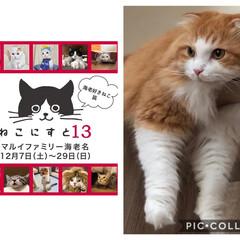 イベント情報/猫好き集まれ/LIMIAにゃんこ同好会/LIMIAペット同好会/おでかけ ねこ好きさん向けのイベント ねこにすと1…