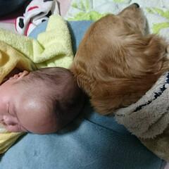 冬/ペット/犬/親バカ 愛犬テツと息子は 仲良く頭をくっつけてね…