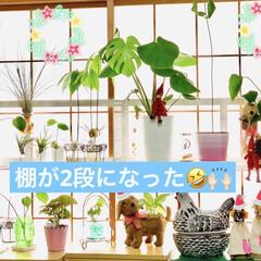 日当たり良好/インテリア/部屋全体/ハンドメイド/雑貨/DIY/... 少し前に 観葉植物を🌱🌱🌱 日当たり良好…