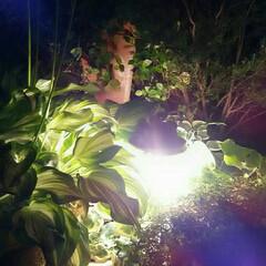 ガーデンライト ガーデンライト