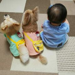 ペット/犬/チワワ/ポンチョ みんなで幼稚園のバス待ちみたい。 左、ダ…