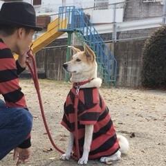忠犬/散歩/ボーダー/ペット/犬/ファッション 師匠とペアルック🤣 一生 ついていきます…