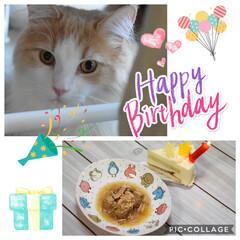 誕生日パーティー/LIMIAペット同好会/にゃんこ同好会 今日はふうの1歳の誕生日🎉 ターキーの白…