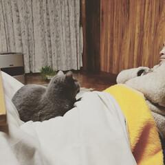 ねこのモモ/ペット/ペット仲間募集/猫/にゃんこ同好会 モモたんと、オヤヂ♡