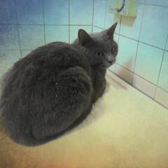 ペット/猫/にゃんこ同好会/ねこのモモ ががーん 一緒に寝たいのに… お風呂で寝…