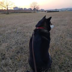 柴犬/黒柴犬/散歩/河川敷で散歩/柴犬LOVE/柴犬女の子 河川敷でお散歩🎵 帰るよ~って言っている…(1枚目)